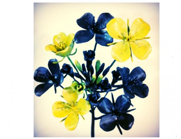 ロートアイアンオブジェ菜の花のアップ写真