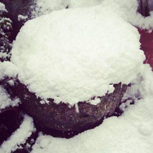 金魚鉢に積もった雪